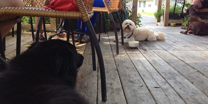 Dog Party!